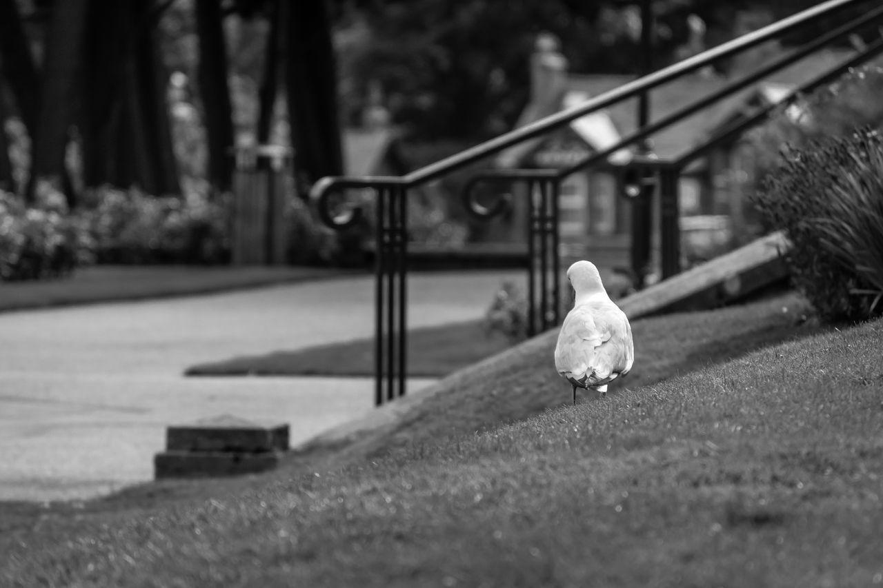 CLOSE-UP OF BIRD PERCHING ON TREE AT PARK