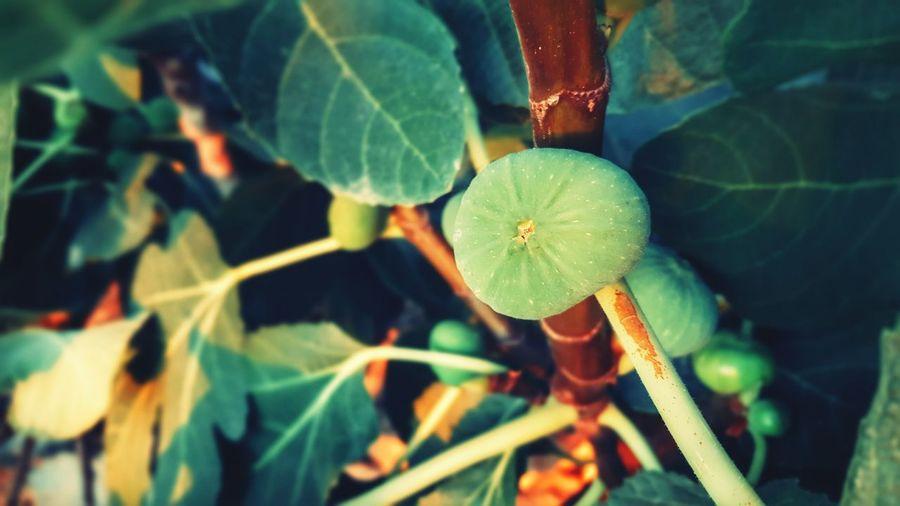 Close-up of fruit growing outdoors