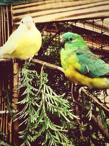 Bird Show Vogel Vogel
