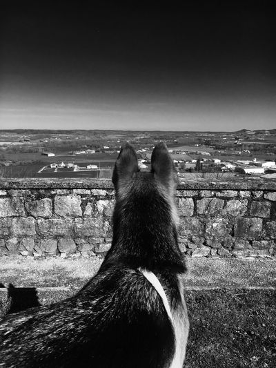 Vue de Monflanquin Avec ma chienne en mode star. First Eyeem Photo