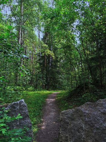 Outdoors Forest Tree Trees Tree Trunk Nobody Stone Stones Way Summer Nature Path Showcase July Nature_collection Nature Photography Naturelovers