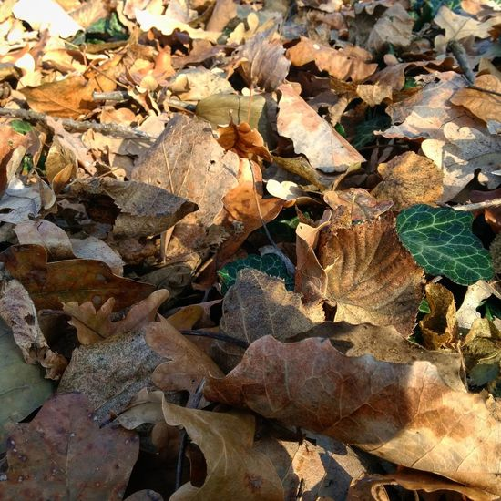 Leaf Autumn Nature Backgrounds Leaves Outdoors ősz Forest Erdő Nature Beauty In Nature Leaf 🍂 Leaf Litter Avar