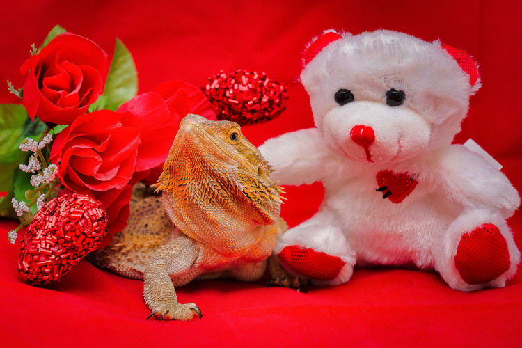 Bearded Dragon Lizard Love Valentine's Day  Animal Animal Representation Animal Themes Art And Craft Celebration Close-up Decoration Domestic Animals Holiday Indoors  Mammal Nature No People One Animal Red Representation Sexygirl Softness Stuffed Toy Teddy Bear Toy
