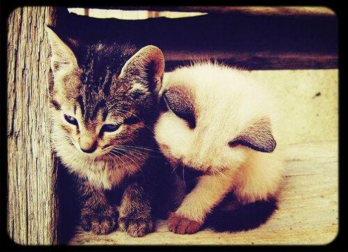 I love cats ♡♡