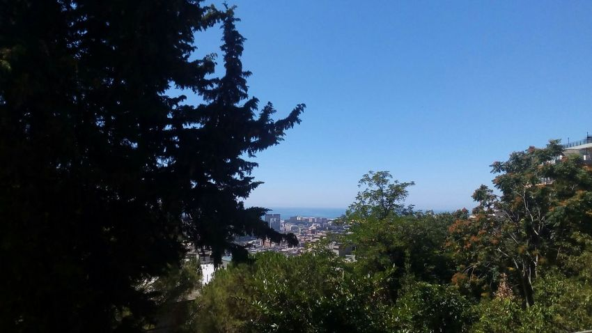 City Генуя Genovacity Taking Photos Grass природа🍃 Baum Blue Sky Sea And Sky Horizon Over Water Blue Sky Water Sea Life Sea View Landscape City Nature Tree And Sky Baum 🌳🌲 Beauty In Nature Natural Pattern