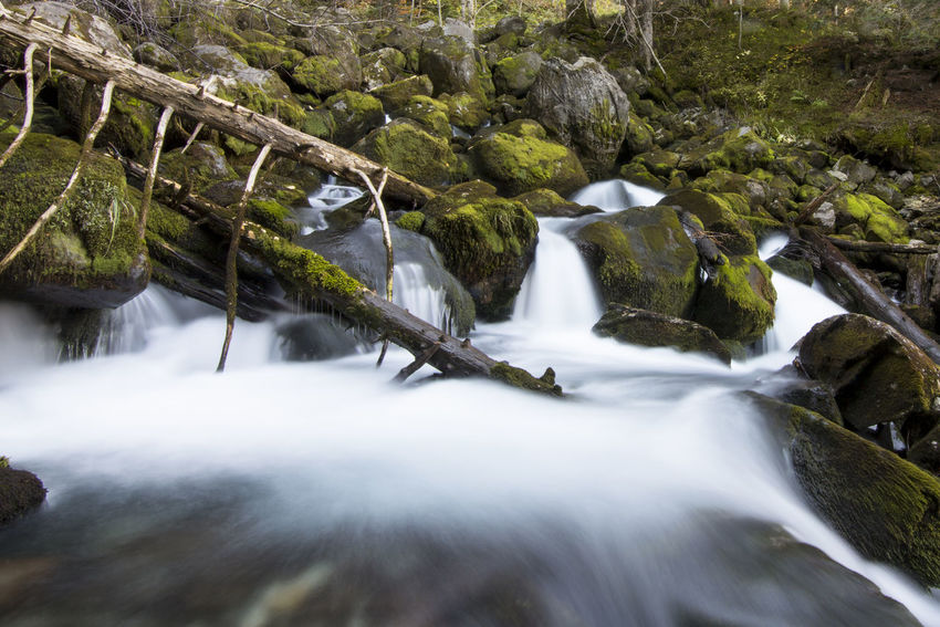 Water Waterfall Long Exposure Tree Nature Outdoors Forest Beauty In Nature Excursion Mountain Valley Val D'Aran Landscape Photography Landscape Green Exposition Time Moss River Beauty In Nature Tree Nature
