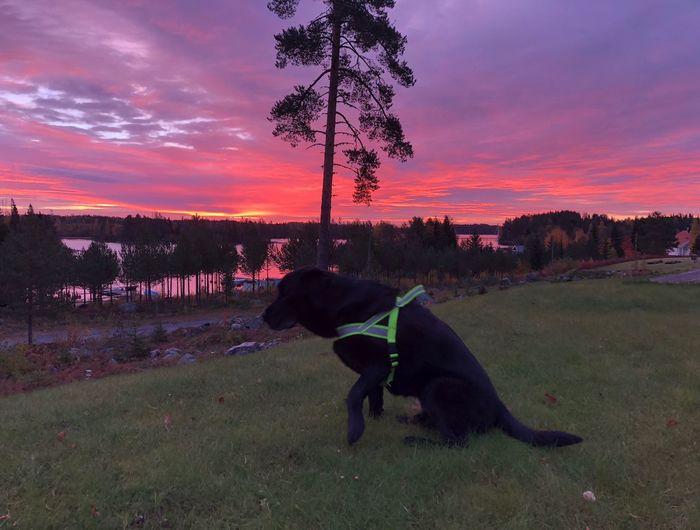 Nice morning, sky is burning 😊 Pets Domestic Domestic Animals One Animal Dog Canine Mammal
