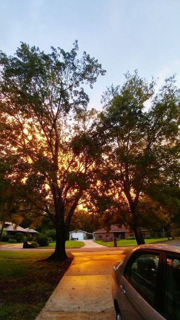 Check This Out Nature Beautiful Photography Florida No Filter, No Edit, Just Photography Sun Peeking Through The Trees Sunset Perfection Orange Eyeemphoto
