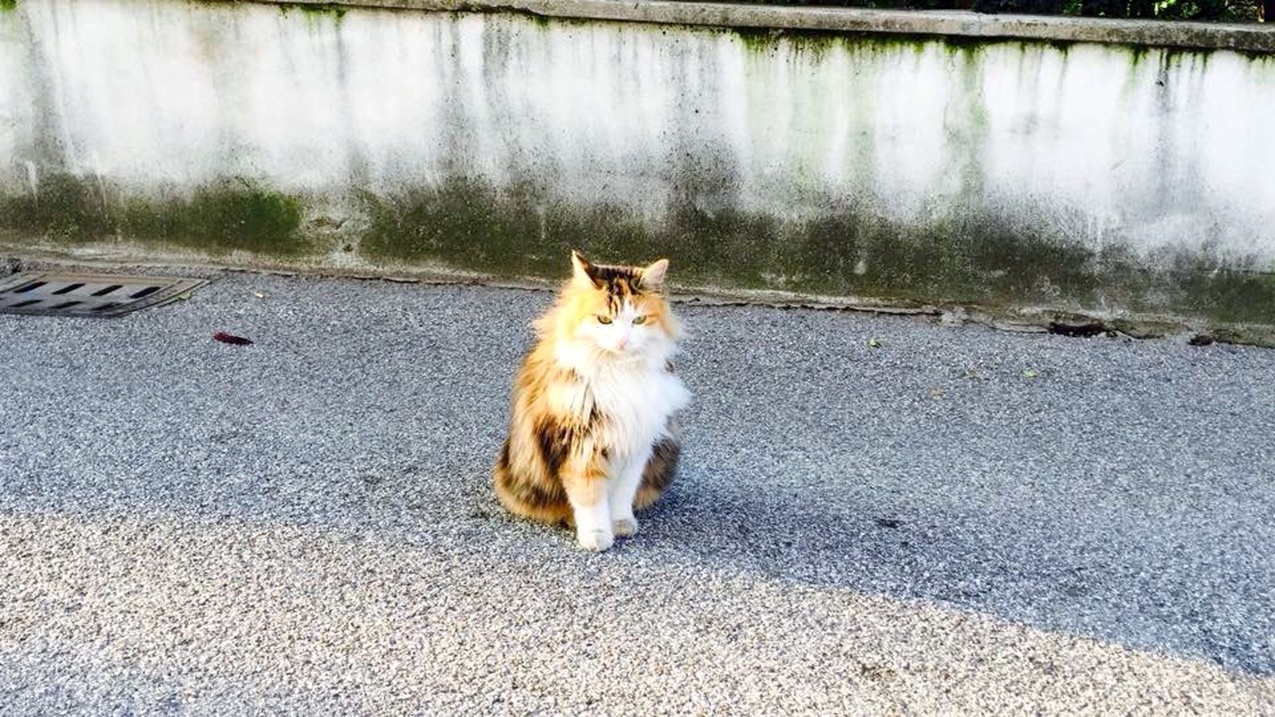 pets, animal themes, domestic animals, one animal, mammal, domestic cat, cat, feline, portrait, looking at camera, street, whisker, sitting, outdoors, day, zoology, dog, relaxation, no people, road