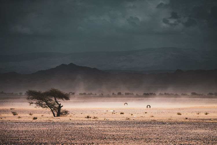 Sand Storm Animal Themes Environment Animal Landscape Animal Wildlife Sky Animals In The Wild No People Storm Scenics - Nature Beauty In Nature Group Of Animals Fog Vertebrate Mountain Outdoors Cloud - Sky Nature Mammal Land