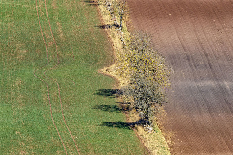 High angle view of tree on field