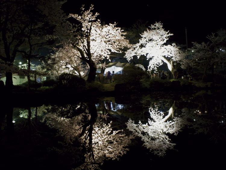 Beauty In Nature Cherry Blossoms Flower Lake Nature Night Night Photography Nightphotography No People Outdoors Reflection Tree Water サクラ Sakura 夜桜 Yozakura