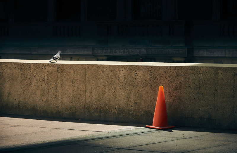 Animal Themes Architecture Bird Building Exterior Built Structure Day Dove No People Outdoors Still Life Streetphotography Sunlight And Shadow Traffic Cone