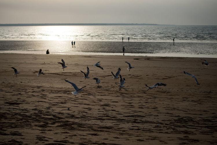 Australia Nature Travel Beach Flying Horizon Over Water Sand Seagull Sunset Water