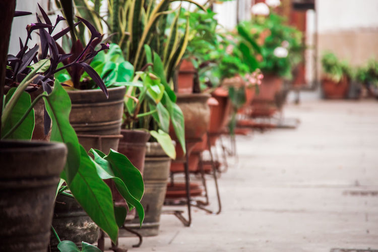 Plant Growth Potted Plant Green Color In A Row Seat Leaf Plant Part Nature No People Chair Day Table Empty Focus On Foreground Selective Focus Outdoors Arrangement Absence Beauty In Nature Flower Pot Houseplant