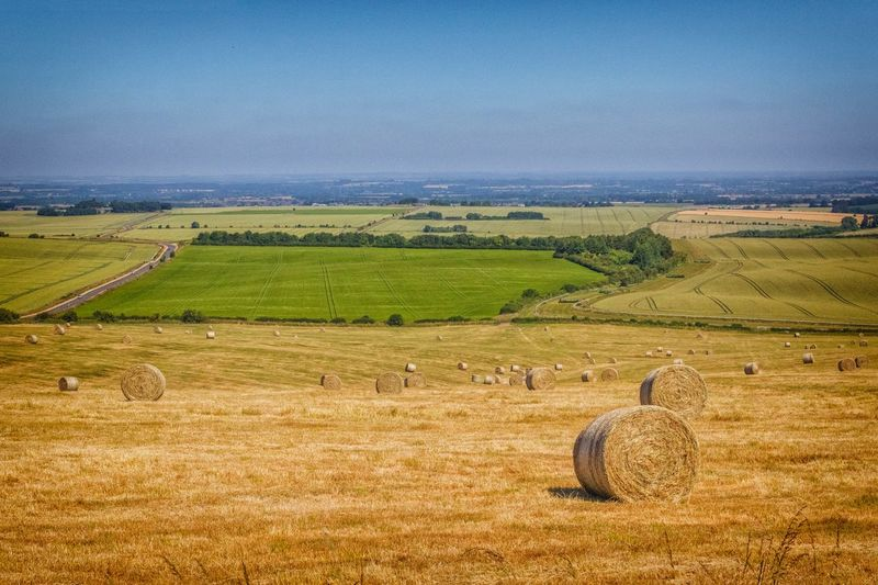 Ridgeway landscape Uk The Ridgeway National Trail Walking Rambling Agriculture Field Landscape Rural Scene Land Farm Scenics - Nature Environment Tranquil Scene Tranquility Nature Crop  Growth Plant Beauty In Nature No People Day Outdoors Sky Green Color