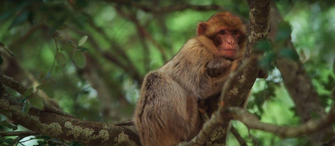 Mammal Tree