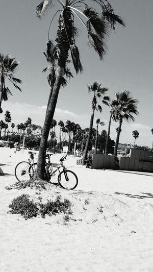 Monochrome Monochrome Photography CyclingUnites Black And White Bicycle Tree Outdoors Palm Tree No People Horizontal Day Atmospheric Mood Nature Fine Art Photography Still Life Photography Check This Out Meditation Sand Sharing The Day Beach Sunlight Beauty In Nature