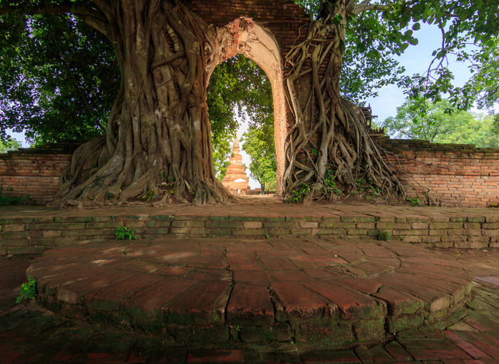Trees in a temple