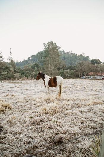 Horse in field against sky