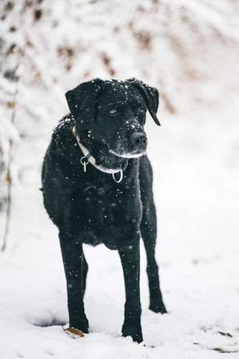 Close-up of dog on snow covered land