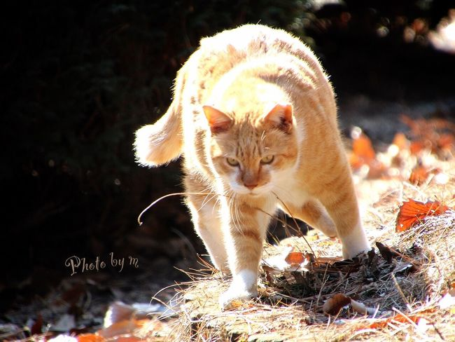 Cat Cat♡ Stray Cat 野良猫 猫 Animal Playing With The Animals 茶猫 ぶちゃ猫 Photography