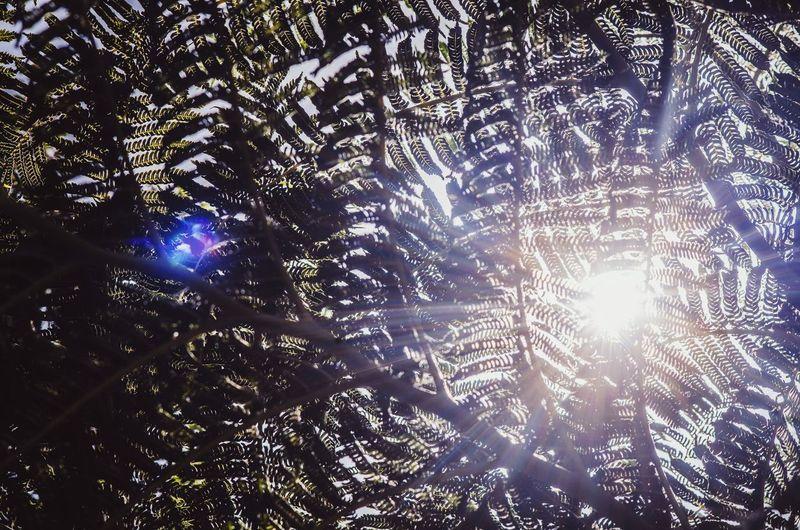 Tree Forest Backgrounds Full Frame Sunlight Sky Sunrays Sun Silhouette Sunbeam Blooming Lens Flare Solar Flare Calm Branch Plant Life