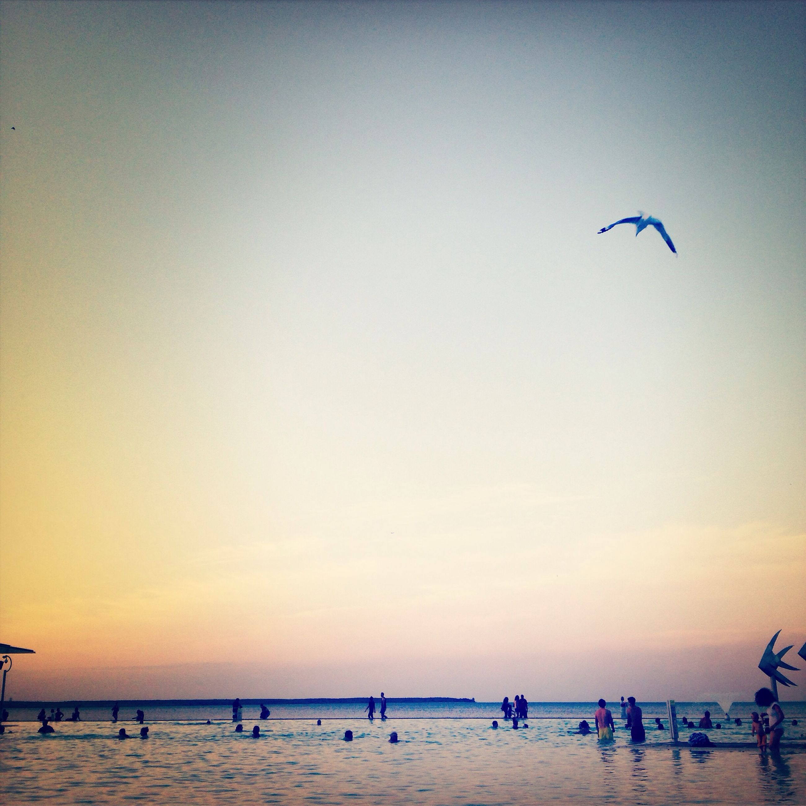 sea, horizon over water, flying, beach, water, bird, sky, animal themes, vacations, scenics, leisure activity, sunset, tranquility, beauty in nature, mid-air, sand, tranquil scene, nature, clear sky