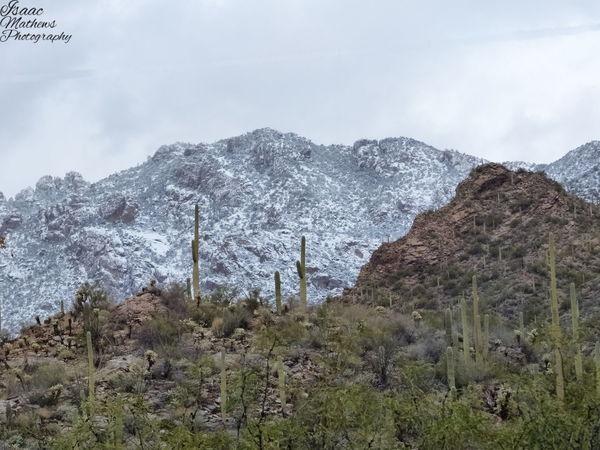 Desert Snow #sunset #sun #clouds #skylovers #sky #nature #beautifulinnature #naturalbeauty #photography #landscape Catalina Mountains  Desert Beauty Mountain Mountain Range Saguaro Scenics Snow