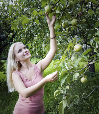 Young blonde woman picking apples in Estonia Adult Adults Only Agriculture Apple - Fruit Blond Hair Branch Food Food And Drink Freshness Fruit Growth Healthy Eating Healthy Lifestyle Lifestyles Nature One Person Orchard Outdoors People Picking Real People Tree Young Adult Young Women