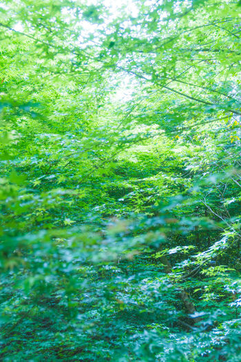 Backgrounds Beauty In Nature Branch Close-up Day Defocused Forest Freshness Full Frame Green Color Growth Nature No People Outdoors Plant Tree Water