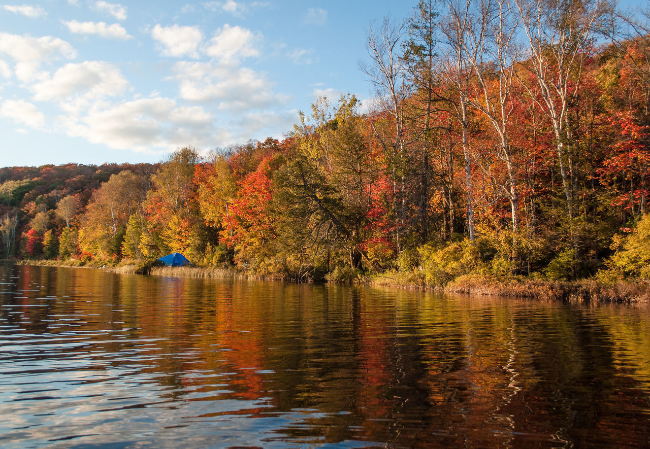 SCENIC VIEW OF LAKE AND TREES DURING AUTUMN