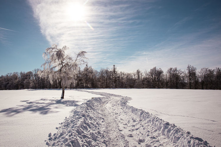 Scenic view of snow covered trees against sky