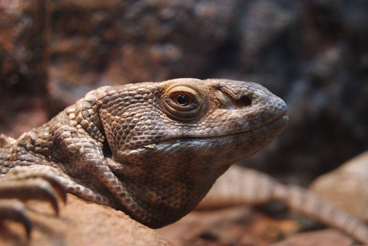 Close-Up Of Lizard In Zoo