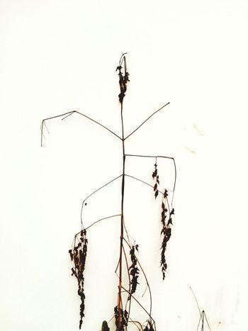 เหี่ยว 🍃 Tree Natural Wither