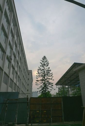 Tree Lifestyles Streetshot Dusk Sunset Cloudy Sky Afterschool  Buildings Quiet Moments Sky And Trees