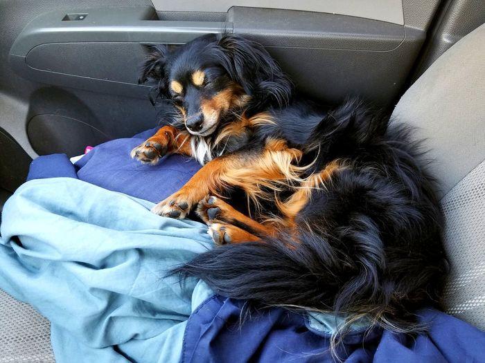 Sleeping EyeEm Selects Pets Dog Close-up