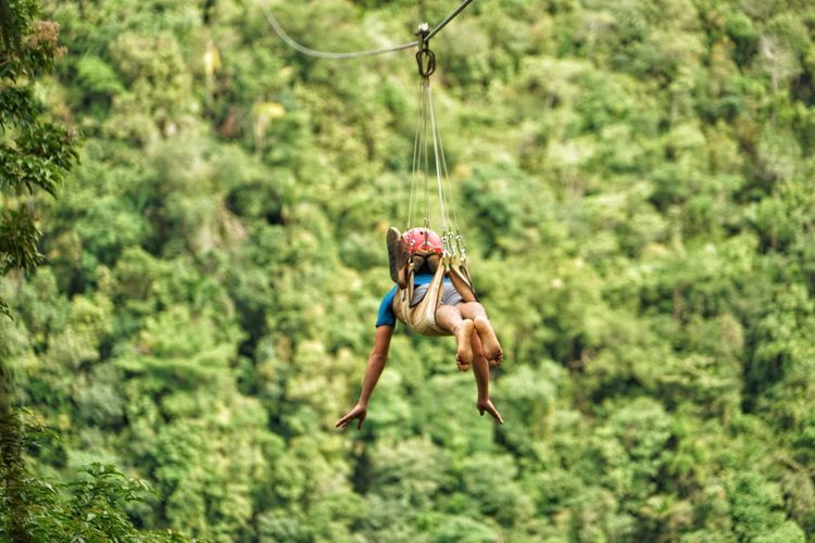 Zip-Line The Great Outdoors - 2018 EyeEm Awards The Traveler - 2018 EyeEm Awards Philippines Photos Bohol Island Bohol Philippines Travel Bohol Adventure Streamzoofamily Bohol Action Shot  Activity Activity In The Park Tree Flying Close-up Plant Green Color Extreme Sports Mid-air Energetic