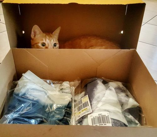 Retoure... 😎😂 Indoors  One Animal Animal Mammal Hiding Pets Looking At Camera Domestic Cat Animal Themes Close-up Domestic Animals Red Cat Cats Of EyeEm Retour  Animal Photography Parcel Lagguage Box Cat EyeEmNewHere Let's Go. Together. Pet Portraits