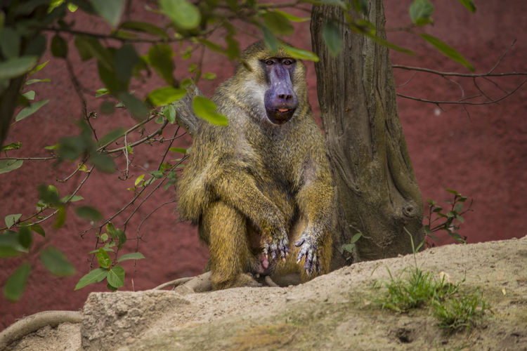 Baboon -Life in a hot day Animal Themes Animal Wildlife Animals In The Wild Baboon Baboon Family Hyderabad Zoo Park Hyderabad Zoo Park Photos Mammal Monkey Forest Nature Nehru Zoological Park No People One Animal Outdoors Telanganatourism Tree Zoo Park Hyderabad