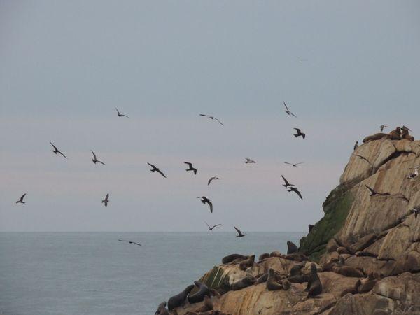 Hidden Gems  Nature Lover Nature Sanctuary Beauty In Nature Rocks And Sea Sea Lions Birds In Flight Reñaca Beach , Chile