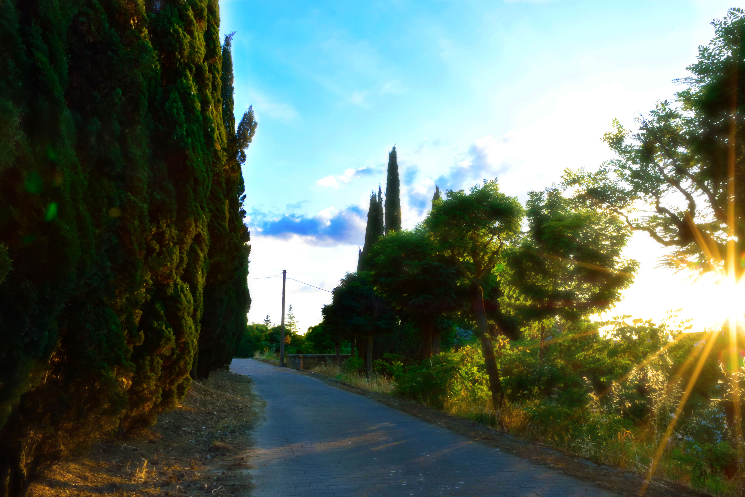 tree, road, the way forward, growth, sky, sunlight, nature, no people, beauty in nature, day, outdoors, scenics