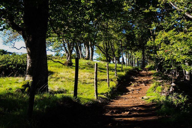 Auvergne Nature Chemin De Montagne Chemin Chemin Ombragée Ombrage Arbres Promenade Verte Ballade Paysages