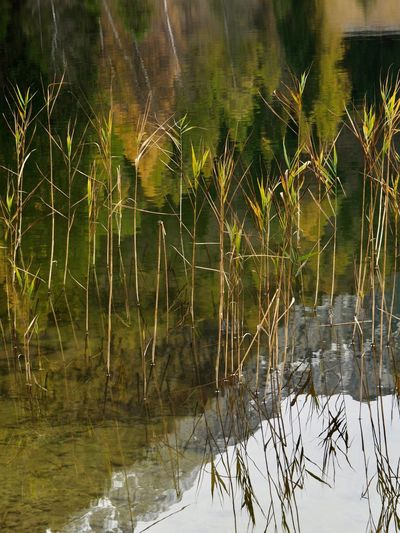 Perspectives On Nature Beauty In Nature Autumn🍁🍁🍁 Reflections In The Water In Bayern Germany