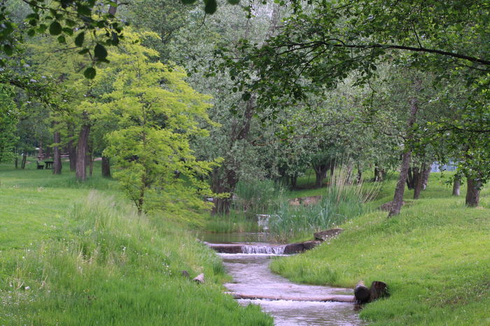 Beauty In Nature Brook Forest Green Green Color Nature Non-urban Scene Relaxing Moments River Scenics Tranquil Scene Tree Trees