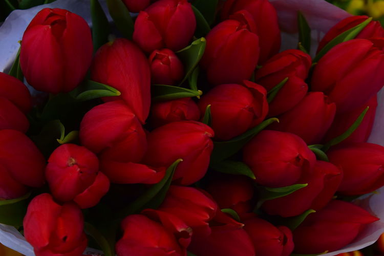 Tulips Tulips🌷 Flower Red Beauty Love Close-up
