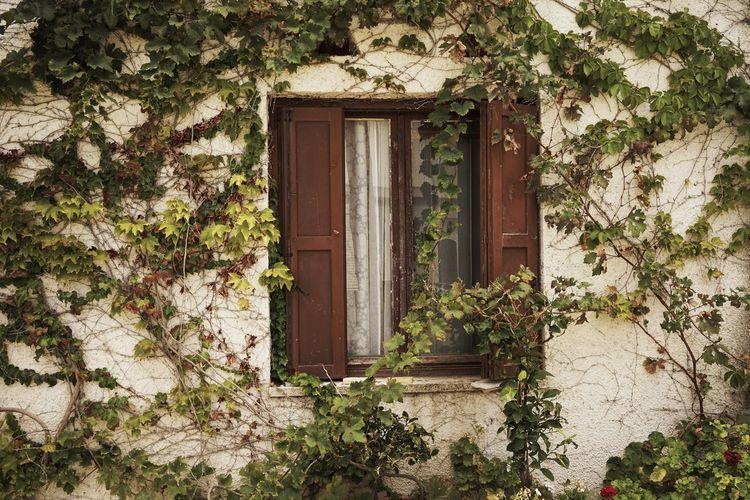 Window 25