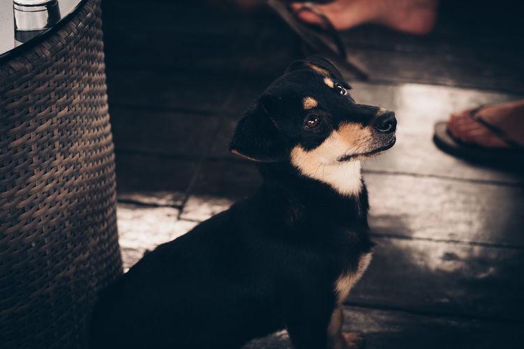 Dog looking up at cafe