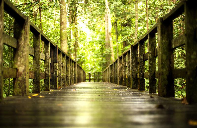 Wooden bridge against trees
