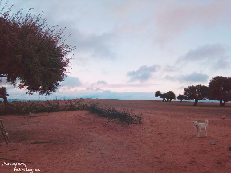 The Dog of the countryside Dog Dog Domestic Animals Day No People Nature Mammal Animal Themes Tree Sky Outdoors